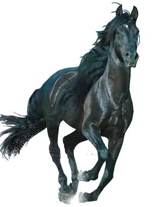 子蛇年第一谱 葫芦丝独奏 孤独的黑骏马 葫芦丝 巴乌曲谱 制谱论坛